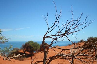 australia_619.jpg