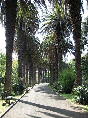 tropicalbotanic.jpg