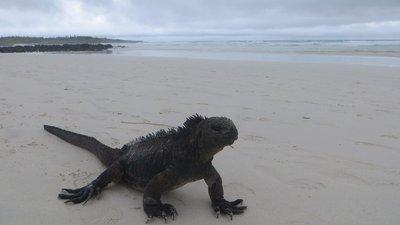 Galapagos, île de Santa Cruz