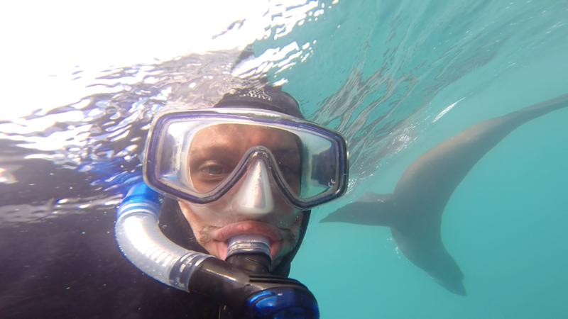 Kaikoura, snorkelling avec phoques