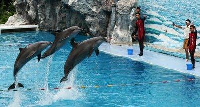 dolphin_show.jpg