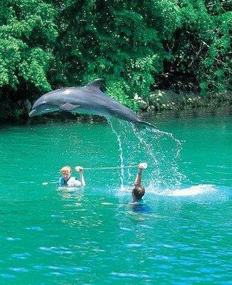 dolphin_swimming.jpg