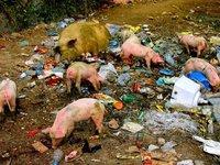 Pink Porky