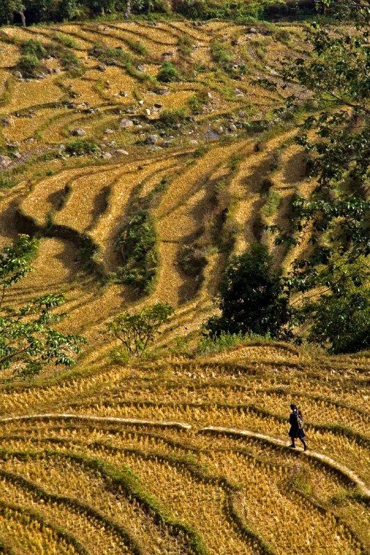 Sikkimese terraces