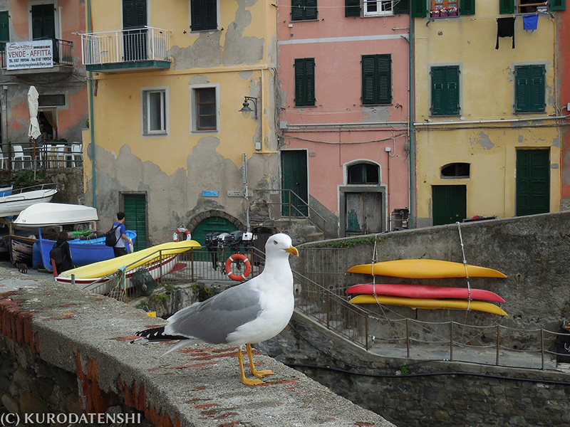 Gull at Riomaggiore