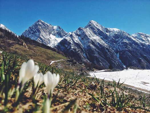 At Monte Rosa.