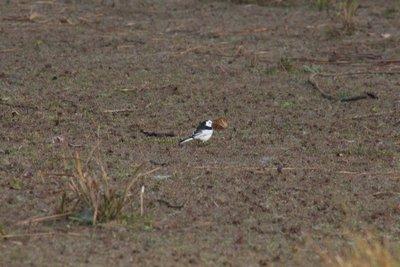 Bird inside the national park