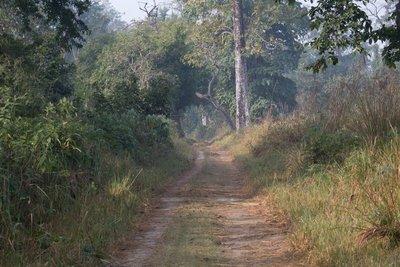 way through the Bardia national park