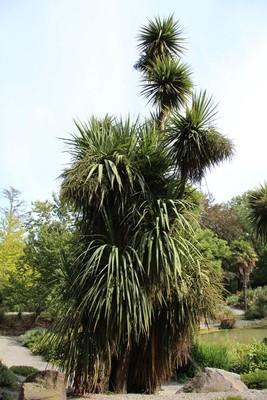 270_christchurch-botanical-gardens_49920174688_o.jpg