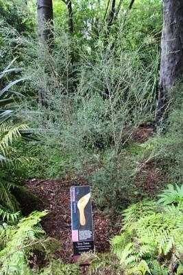 270_christchurch-botanical-gardens_49920695241_o.jpg