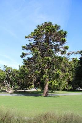 270_christchurch-botanical-gardens_49920876792_o.jpg