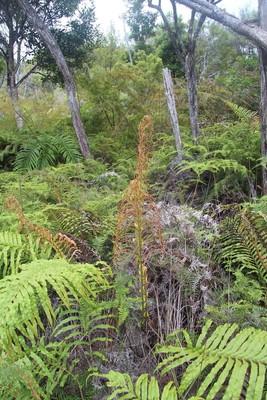 270_waipoua-kauri-forest-new-zealand_32315203606_o.jpg