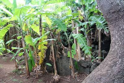 ana-te-pahu-easter-island_32436388793_o.jpg