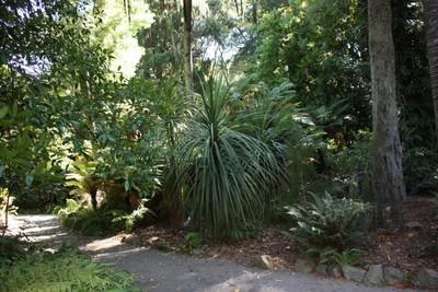 botanical-gardens-christchurch_49920686766_o.jpg