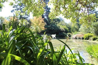 christchurch-botanical-gardens_49920146693_o.jpg