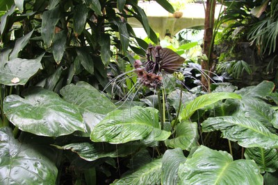 christchurch-botanical-gardens_49920184473_o.jpg