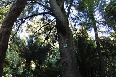christchurch-botanical-gardens_49920663776_o.jpg