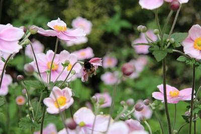 christchurch-botanical-gardens_49920690466_o.jpg