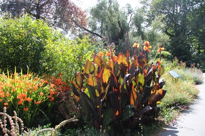 christchurch-botanical-gardens_49920875617_o.jpg