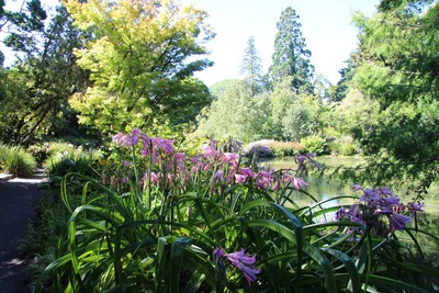 christchurch-botanical-gardens_49920958167_o.jpg