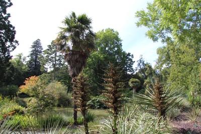 christchurch-botanical-gardens_49920987897_o.jpg