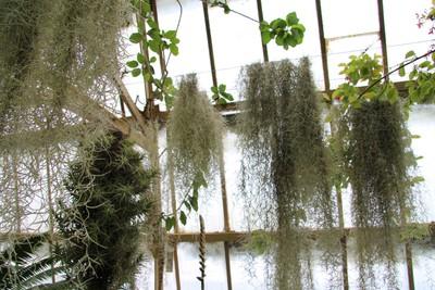 christchurch-botanical-gardens_49921001487_o.jpg