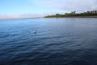 dolphin-chacao-channel-chilo-chile_33376386065_o.jpg