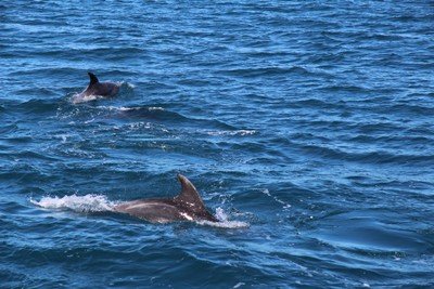 dolphins-and-pilot-whales-kaikoura_49919084493_o.jpg