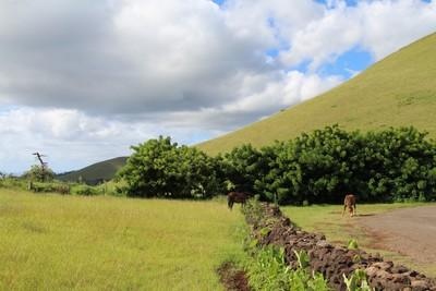 hanga-roa-easter-island_32407699264_o.jpg