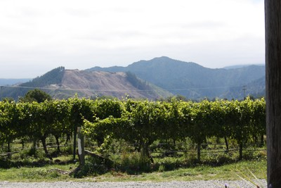 huia-wines-blenheim-wine-tour_49918847583_o.jpg
