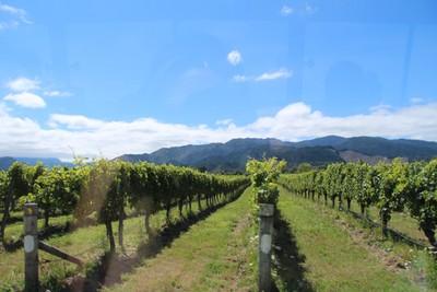 hunters-wine-blenheim-wine-tour_49919653482_o.jpg