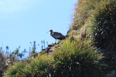 ibis-punihuil_34119317580_o.jpg