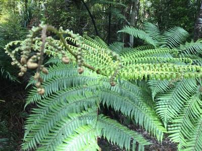 kauri-forest-waipoua_49916792288_o.jpg