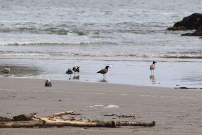 seashore-birds-punihuil-chilo-chile_32533433174_o.jpg