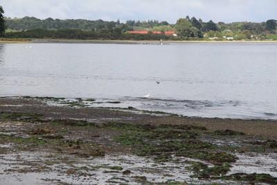 shorebirds-on-caulin-beach-chilo-chile_32993318930_o.jpg