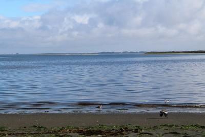 shorebirds-on-caulin-beach-chilo-chile_33248219941_o.jpg