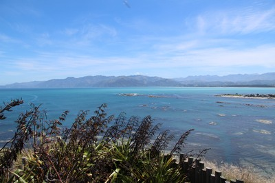 south-bay-kaikoura_49919383371_o.jpg