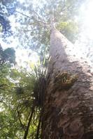 270_waipoua-kauri-forest-new-zealand_31511880644_o.jpg