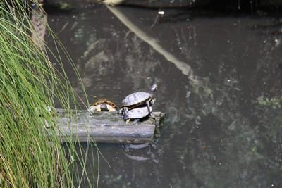 turtle-willowbank-christchurch_49919687426_o.jpg