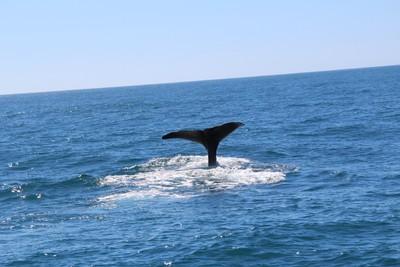 whale-1-kaikoura_49918951518_o.jpg