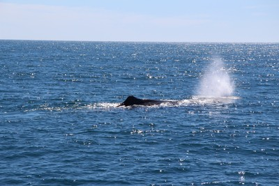 whale-1-kaikoura_49919767197_o.jpg
