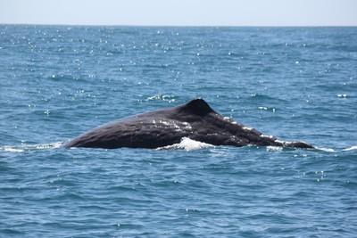 whale-2-kaikoura_49919002368_o.jpg