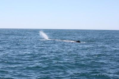 whale-2-kaikoura_49919008658_o.jpg