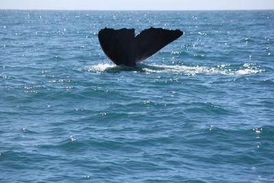 whale-2-kaikoura_49919481241_o.jpg