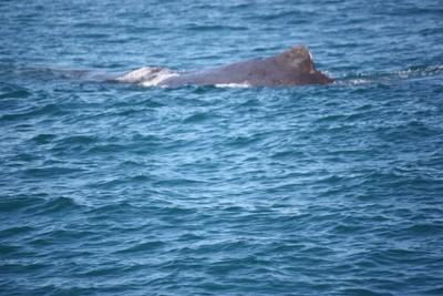 whale-3-kaikoura_49919808742_o.jpg