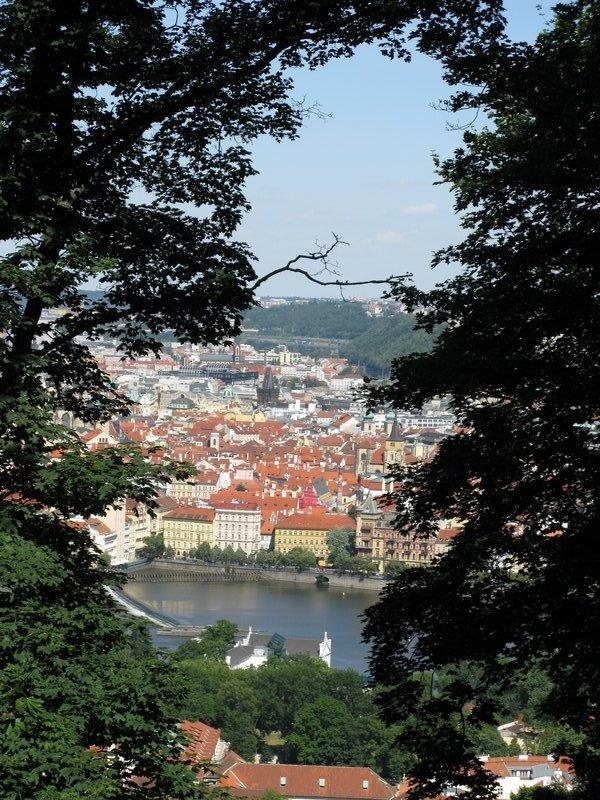 Prague through the trees