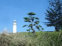 Kiama_Lighthouse.jpg