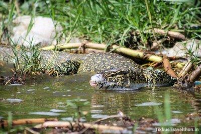 i_reptile.jpg