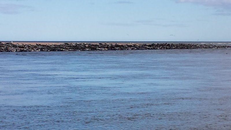 Scotland Newburgh Seals