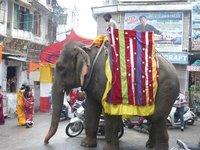 Elefant auf Parade